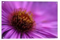 Purple, Acrylic Print