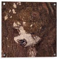 Caninus Treow, Acrylic Print
