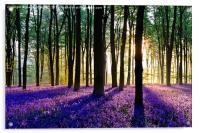 Bluebell Dawn - 5, Acrylic Print