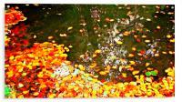 autumn leaves, Acrylic Print