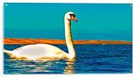 A beautiful swan on the lake , Acrylic Print