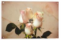 Vintage roses, Acrylic Print
