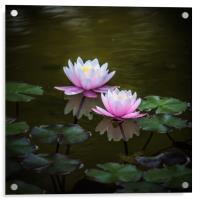 Water Lilies, Acrylic Print