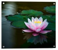 Water Lily, Acrylic Print