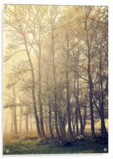 Trees, Acrylic Print