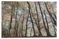 Painted Trees, Acrylic Print