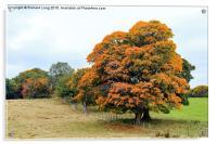 The Golden Oak Tree , Acrylic Print