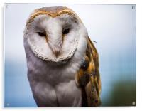 The Barn Owl, Acrylic Print