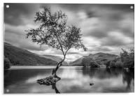 The Lone Tree, Llyn Padarn, Llanberis, Acrylic Print