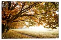 Autumn Fall in morning light, Acrylic Print