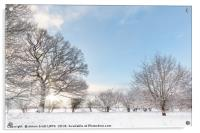 Snow covered tree line with early morning sunrise, Acrylic Print