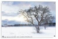 Bare tree in a snow field with sunrise, Acrylic Print