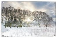 Snow covered rural trees with early morning sunris, Acrylic Print