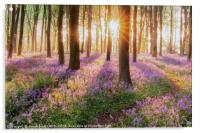 Bluebell forest path at sunrise, Acrylic Print