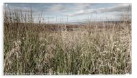 Through the long grass to the Peak District moors, Acrylic Print