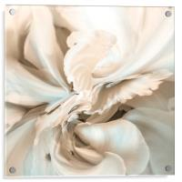 Coral, Acrylic Print