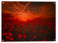 Poppy Field for Remembrance. Lest we Forget, Acrylic Print