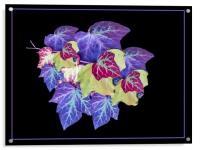 Ivy, Acrylic Print