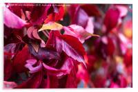 Natures Colour, Acrylic Print