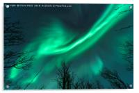 Northern Lights over Trees, Acrylic Print
