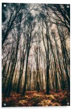 A Woodland Dawn, Acrylic Print