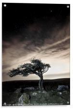 Lonesome Tree, Acrylic Print