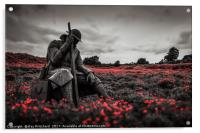 Tommy 1101 in Poppy Field, Acrylic Print