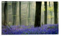 Bluebell Carpet, Acrylic Print
