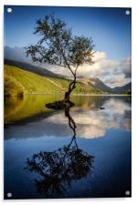 Lone Tree, Llyn Padarn, Snowdonia, Acrylic Print