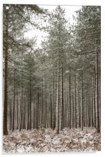 Winter In the New Forest, Acrylic Print