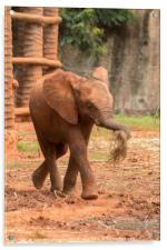 Baby  ช้างไทย, chang #2, Acrylic Print