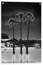 Moon Trees #1, Acrylic Print