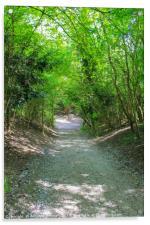 The Tree path, Acrylic Print