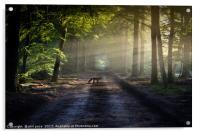 Mr Fox, Acrylic Print