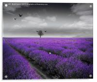 Lavender Fields, Acrylic Print