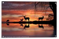 Reflections, Acrylic Print
