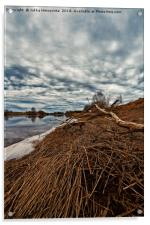 Dead Branch On The River Bend, Acrylic Print