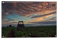 Tractor Parked On The Potato Fields, Acrylic Print