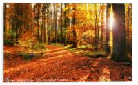 Autumn Forest, Acrylic Print
