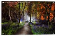 Bluebell Woods, Acrylic Print