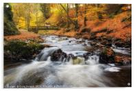 Autumn Alyth Den, Acrylic Print