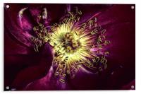 Rose heart , Acrylic Print