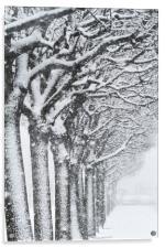 Trees and snow, Acrylic Print