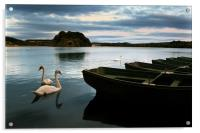 Swans on a Lake, Acrylic Print