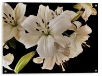 Lilies, Acrylic Print