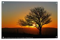 Tree Silhouette at Sunset, Acrylic Print