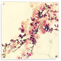 Cherry bloosom Still life , Acrylic Print