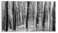 PINE RISING, Acrylic Print