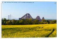 Rapeseed field with three bridges, Acrylic Print