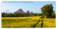 Rapeseed field with three bridges panoramic, Acrylic Print